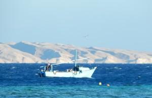 Даже работа на море не обещает отдыха