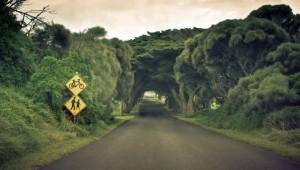 Туннель в деревьях